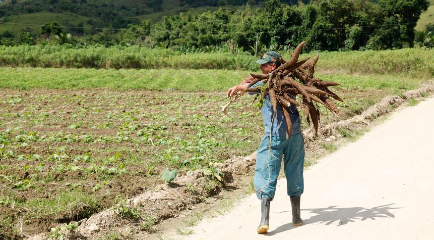 #PraCegoVer imagem de um agriculor carregando mandioca